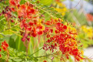 花园种植了超过80种花草树木,其中园景廊划分为春、夏、秋、冬四个区,展现四季不同的色彩。.
