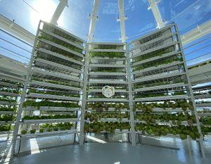 图示温室内的水耕农场,一个月可出产一吨蔬菜。.